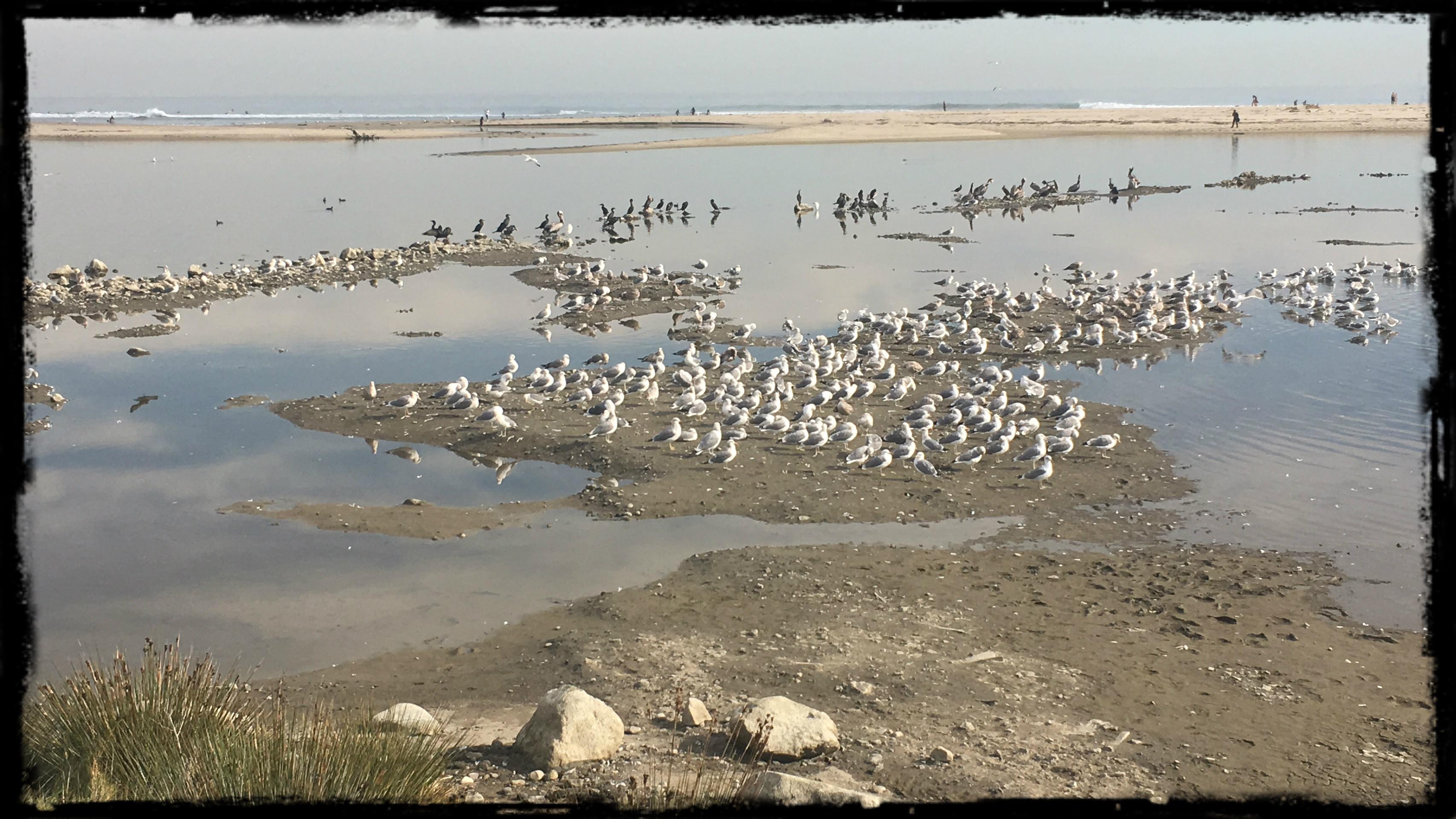 Cali Birds